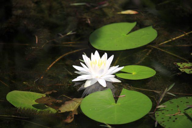 Grassy-Waters-Preserve