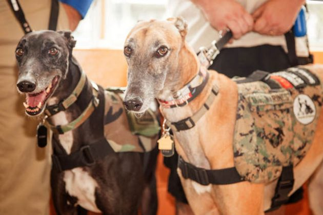 AGA's Hounds and Heroes Presentation