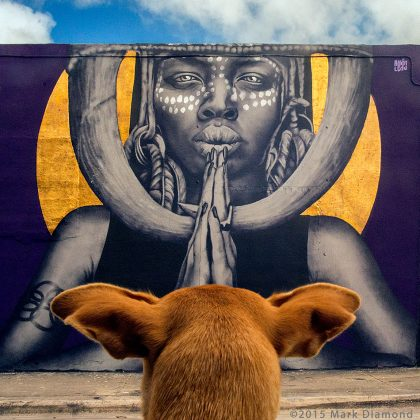 Wynwood-dogs