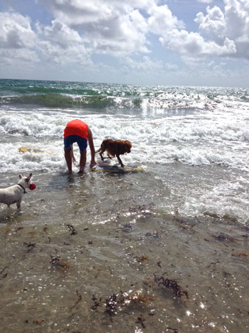 Dog-surfing!