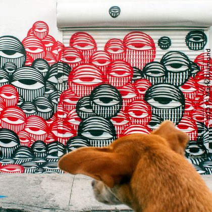 Wynwood-dog-looks-at-Ahol-work
