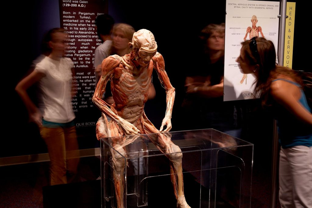 Our Body: The Universe Within exhibit