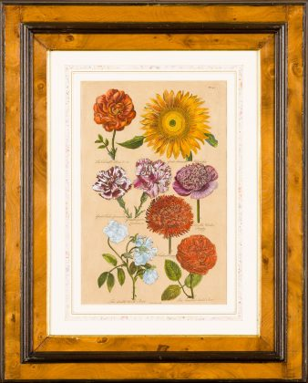 Botanicals, Antique Engravings and Lithographs Exhibition