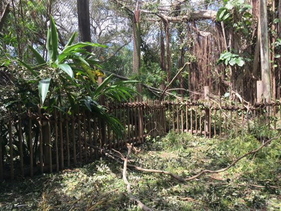 Hurricane Irma Recovery efforts at Palm Beach Zoo
